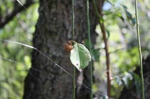 夏の終わりに、蝉の抜け殻。