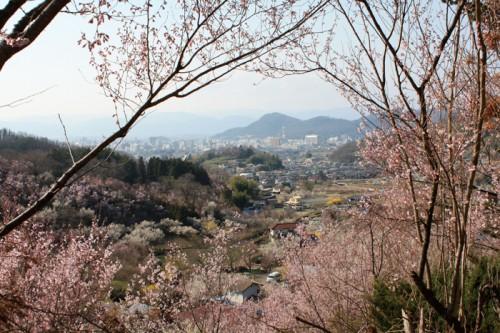 桜を囲んで市内が見えるビューポイント!