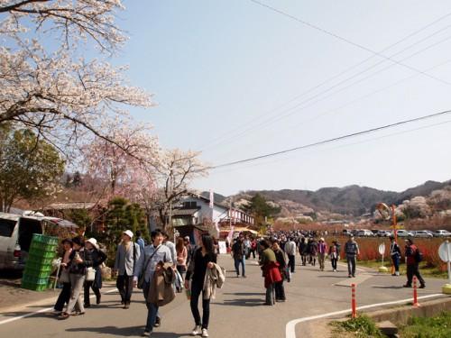 花見山までの通りも賑わっています