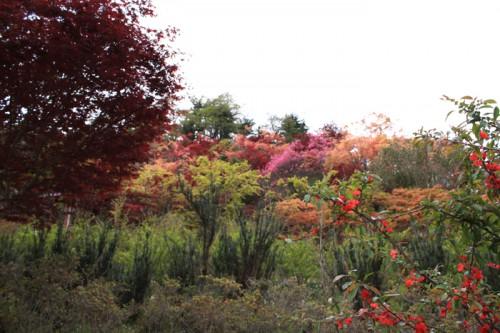 春もみじのグラデーションも花見山の魅力ではないでしょうか