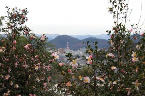 奥に見えるのが、福島市のシンボル信夫山です。