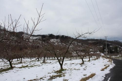 桃の木も少し芽が出ていました。 鳥たちがにぎやかでした。