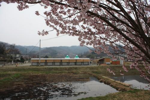 今年は、桜の開花も早いので満開になるのもすぐかもしれませんね