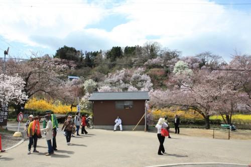 奥のログハウスが「花見山公園前観光案内所」です