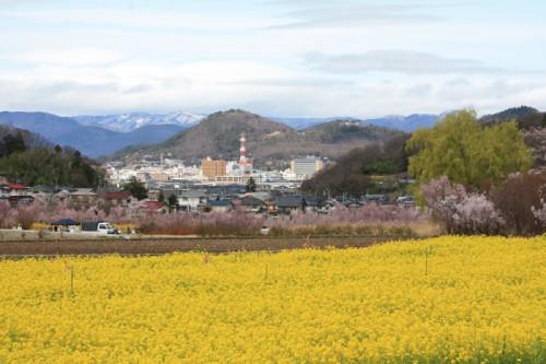 福島市のシンボル信夫山。眩しい程の菜の花のじゅうたん