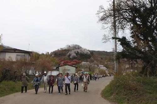 花見山公園2015