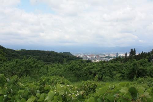 花見山2015