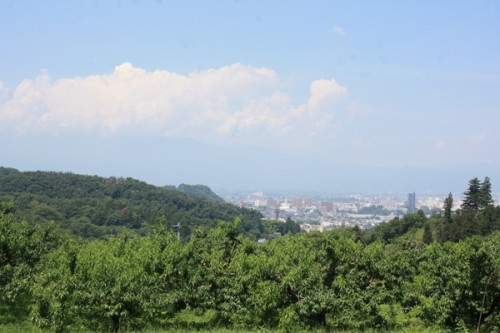 暑さで霞んでいますね。下の木は福島の名産、桃です。