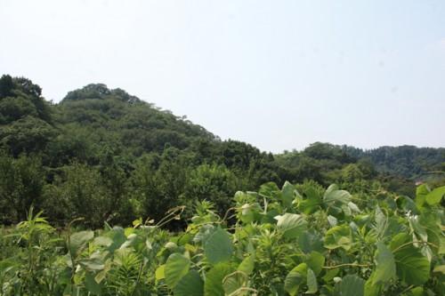 左奥が花見山上部です。緑一色ですね