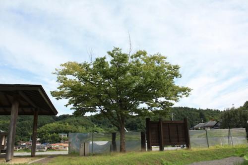 花見山201508