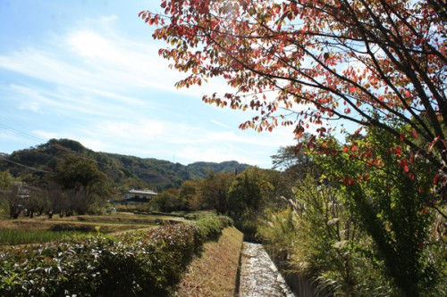 桜の紅葉と秋の空