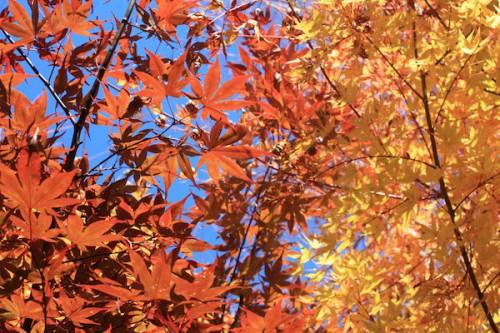 福島県福島市の花見山公園 紅葉