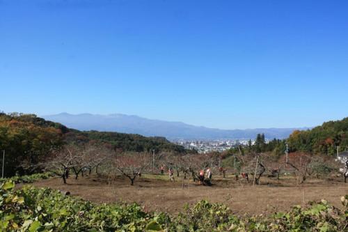 福島県福島市の花見山公園