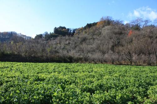 福島県福島市花見山公園の情報15121h1