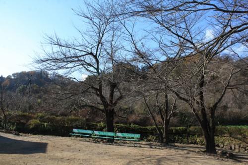 福島県福島市花見山公園の情報15121h2
