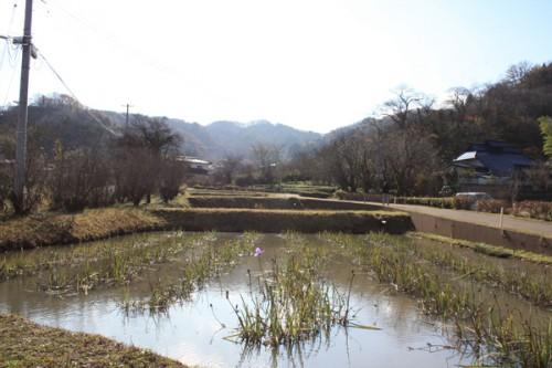 福島県福島市花見山公園の情報15121h5
