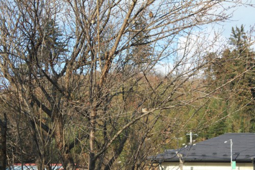 福島県福島市花見山公園の情報 梅の写真