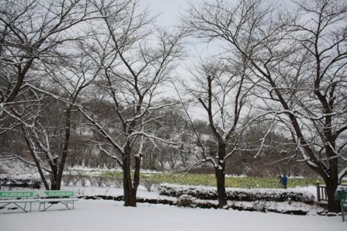 福島県福島市花見山公園の情報 菜の花を撮る方