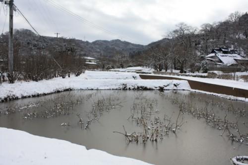 福島県福島市花見山公園の情報 薄氷の菖蒲池
