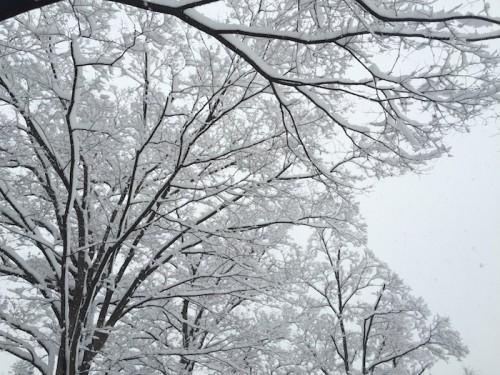 201601降雪