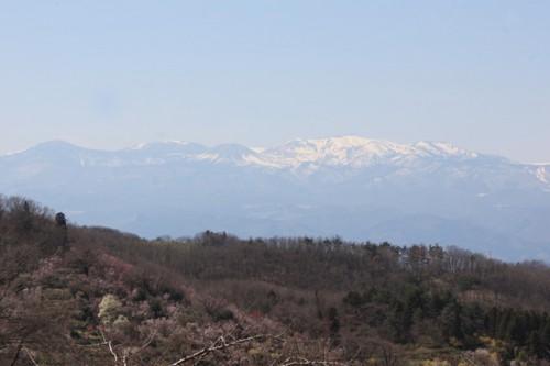 福島県福島市花見山公園の情報