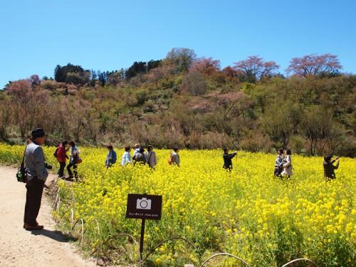 140415 福島県福島市花見山公園の情報 撮影スポット