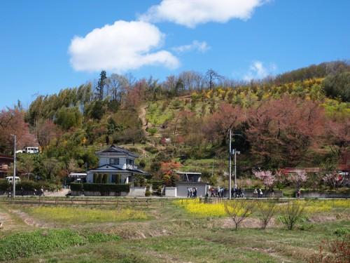 140415 福島県福島市花見山公園の情報
