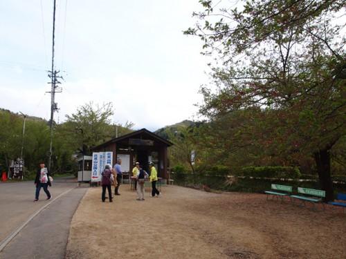 福島県福島市花見山公園の情報 花の案内人