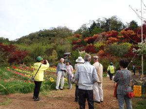160422h5 福島県福島市花見山公園の情報 チューリップ