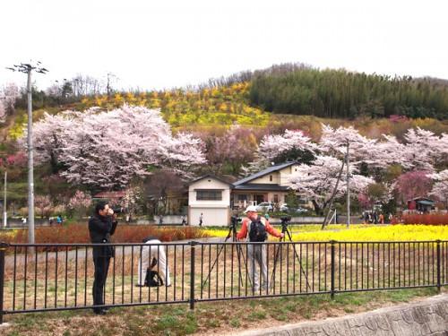 160408 福島県福島市花見山公園の情報