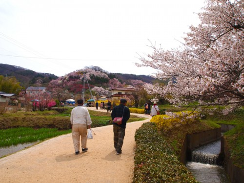160408 福島県福島市花見山公園の情報 花の谷