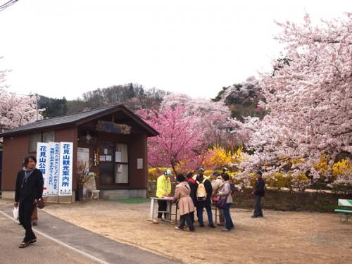 160408 福島県福島市花見山公園の情報 花の案内人