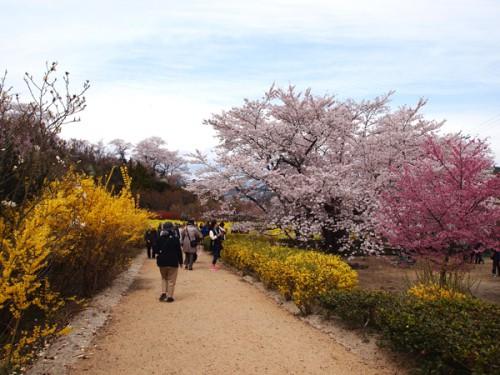 160408 福島県福島市花見山公園の情報 遊歩道