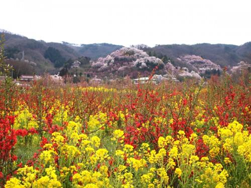 160408 福島県福島市花見山公園の情報 撮影スポット