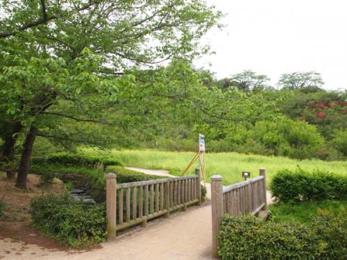 福島県福島市花見山公園の情報 菜の花畑