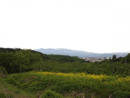 福島県福島市花見山公園の情報 花の谷コースの頂上部