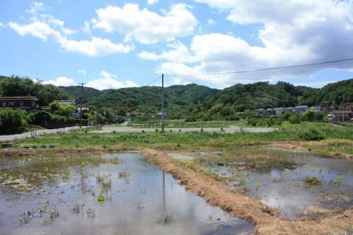 6101 福島県福島市花見山公園の情報 2016年6月1日