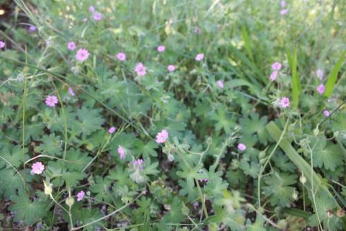 6107 福島県福島市花見山公園の情報 2016年6月1日