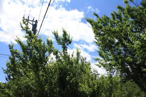 6108 福島県福島市花見山公園の情報 2016年6月1日