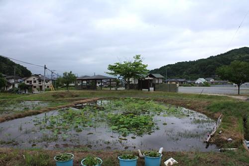 6227 福島県福島市花見山公園の情報 2016年6月15日
