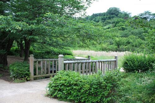 6235 福島県福島市花見山公園の情報 2016年6月15日