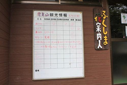 6239 福島県福島市花見山公園の情報 2016年6月15日 花案内人