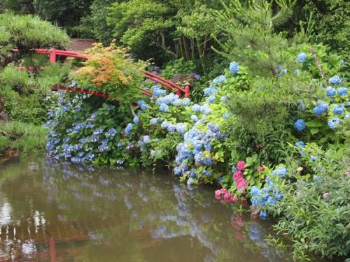 福島県福島市花見山公園の情報 2016年7月6日 紫陽花と池