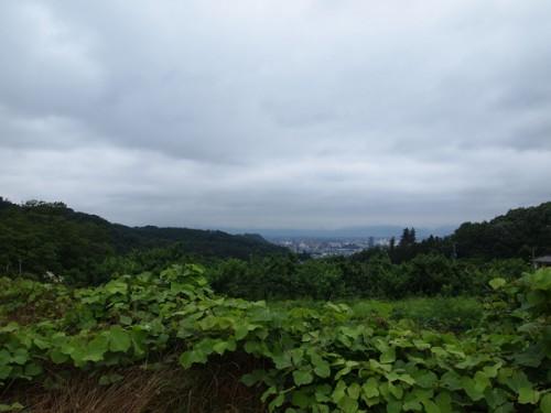 160706h10 福島県福島市花見山公園の情報 2016年7月6日 葛