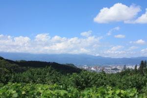 福島県福島市花見山公園の情報 2016年8月31日 IMG_6787