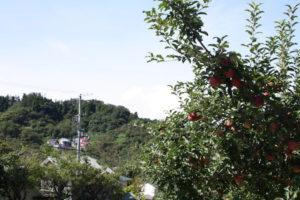 福島県福島市花見山公園の情報 2016年9月15日 IMG_6802