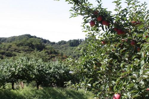 福島県福島市花見山公園の情報 2016年9月15日 IMG_6803