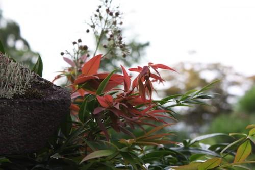 福島県福島市花見山公園の情報 IMG_6838