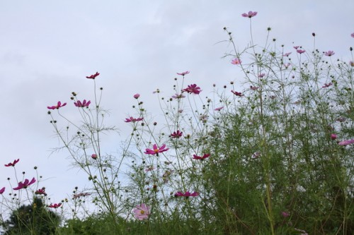 福島県福島市花見山公園の情報 IMG_6871