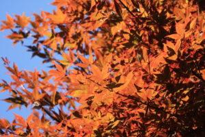 福島県福島市花見山公園の情報2016年10月21日 IMG_7166